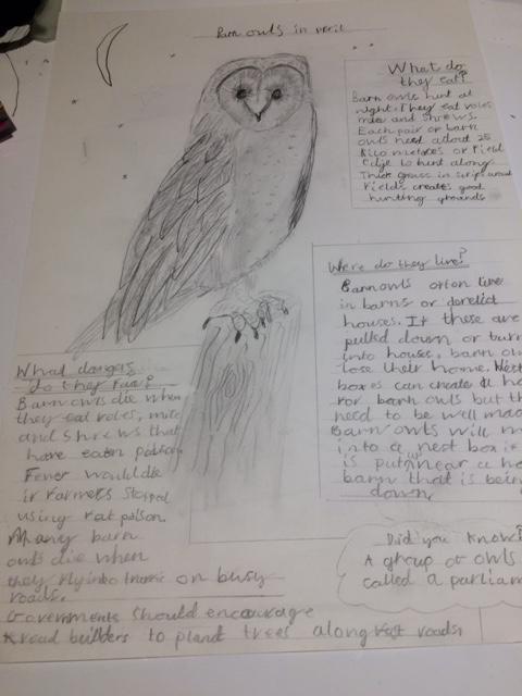 Roger's owl poster