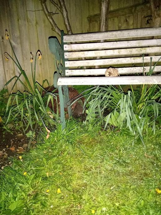 EB: can you make out the hedgehog in the garden?
