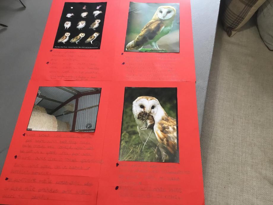 Henry's owl poster