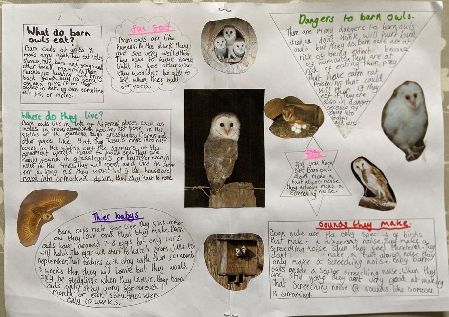 Katie's owl poster