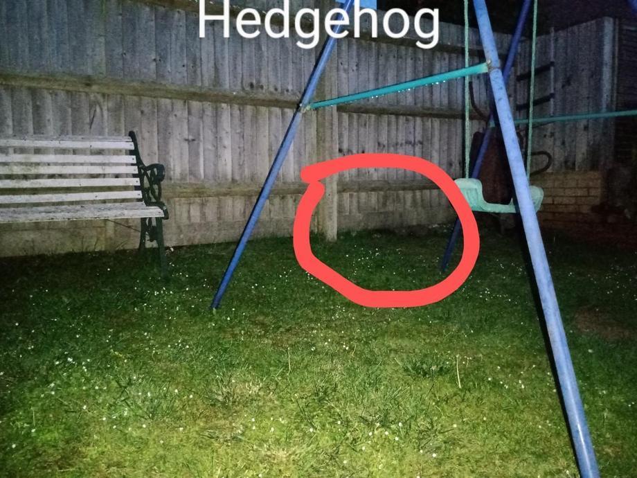 EB's hedgehogs in her garden