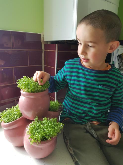Growing (School grounds) - Planting seeds