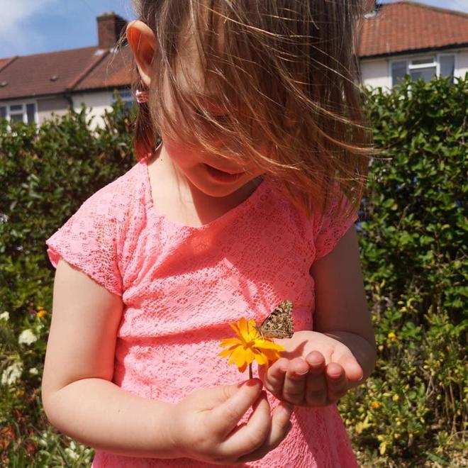 Biodiversity - Growing and releasing butterflies