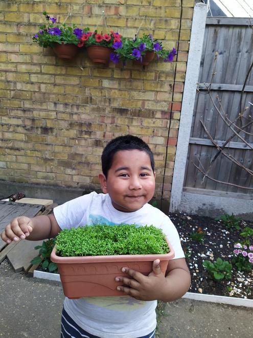Jabid's seeds grew beautifully!
