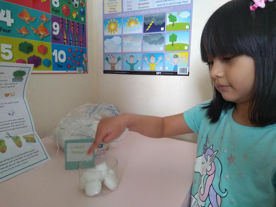 Roya planting her cress seeds in cotton wool