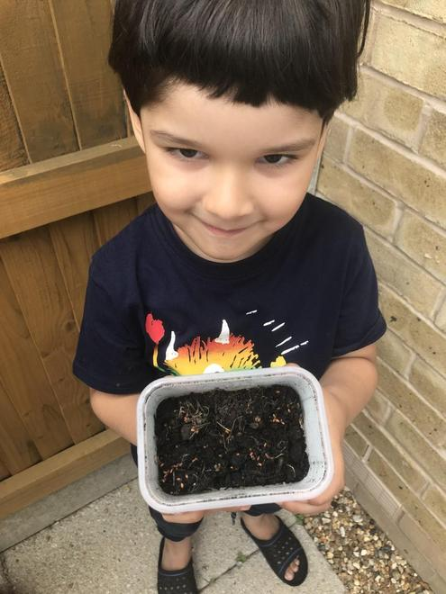 Mohid has planted his cress seeds in soil