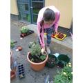 Gardening for Rushmoor in Bloom