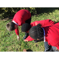 We searched for invertebrates in the nature garden