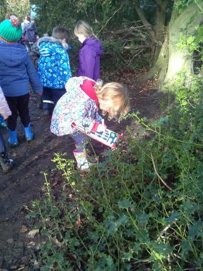 Finding evergreen leaves.