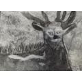 Ben's antelope