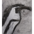 Finlay's penguin