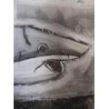 Aaron's shark