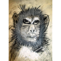 Isabella's monkey