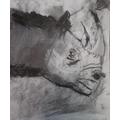 Dillon's rhino