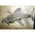 Toby's fish