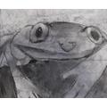 Ruben's frog