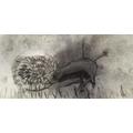 Abbie's snail