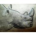 Mia's rhino