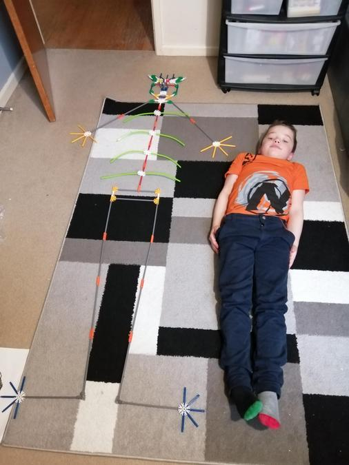 George's skeleton made from K'nex