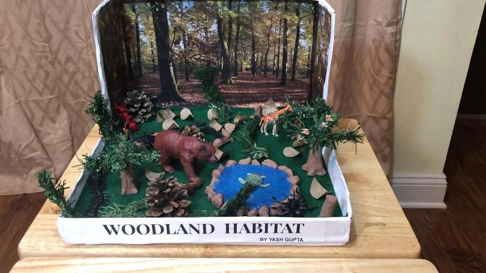 Woodland Diorama