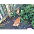 Victoria and Elizabeth - our newest hens
