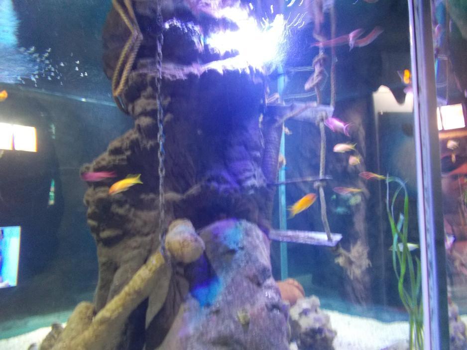 Visit to the Blue Reef Aquarium, Newquay