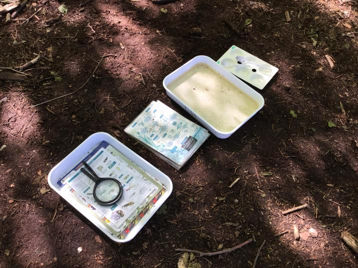 Organised for pond dipping.
