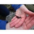 The newt - the first of ten in total!!!