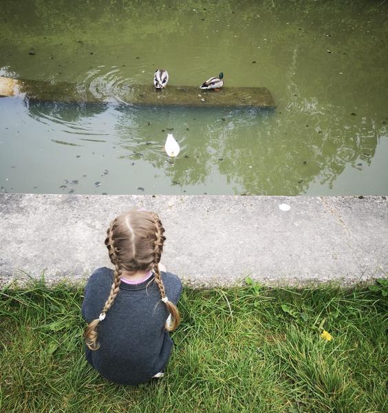 Watching the ducks 🦆