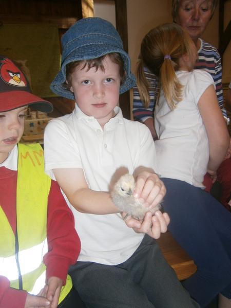 Holding baby chicks carefully