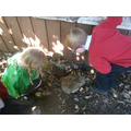 Looking for minibeasts