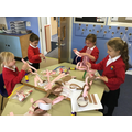 Workshop - Making paper chain worms