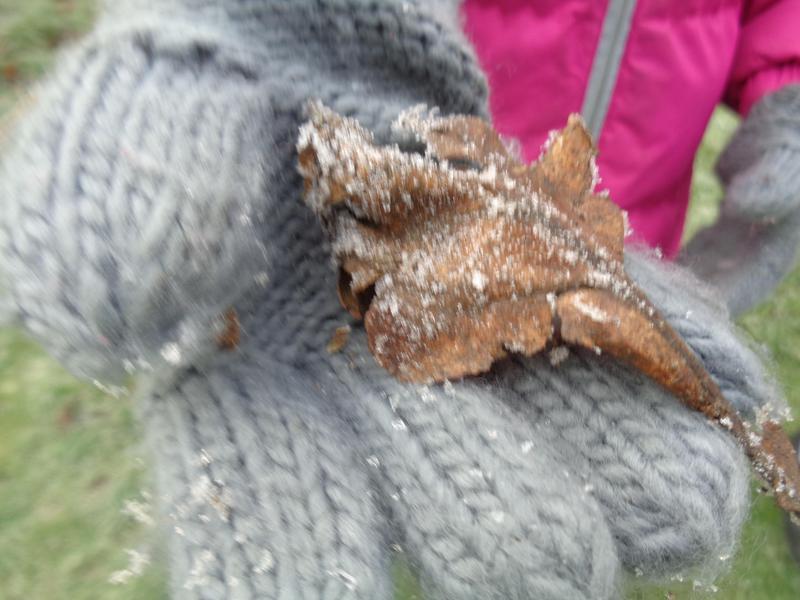 Frosty leaf