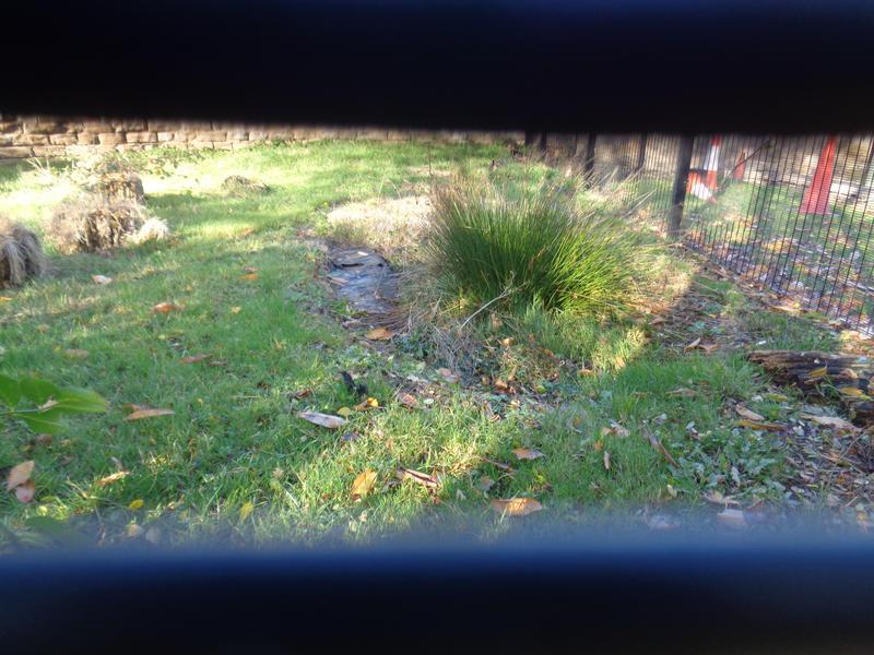 Bog Baby's Pond