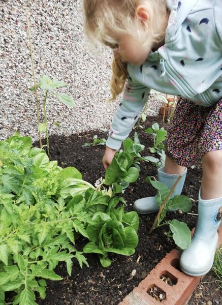 Tending to my vegetables  🥬