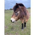 Doris the pony