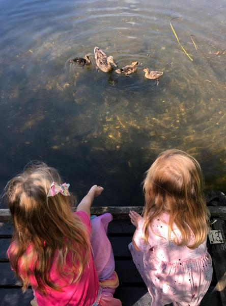 Visiting the ducks 🦆 at the pond