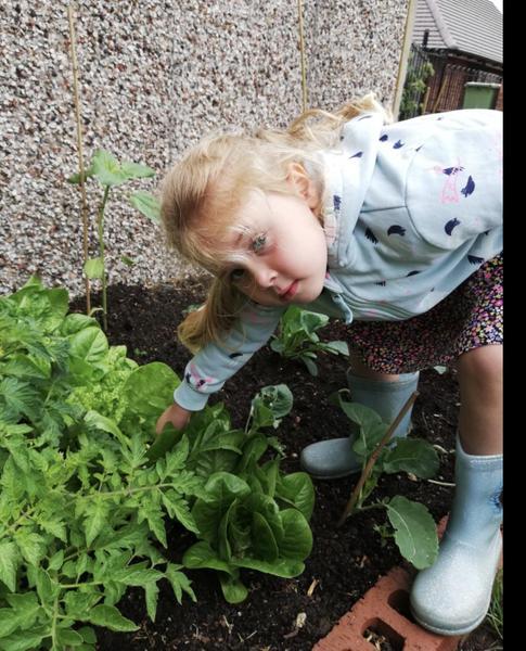 Tending to my home grown vegetables