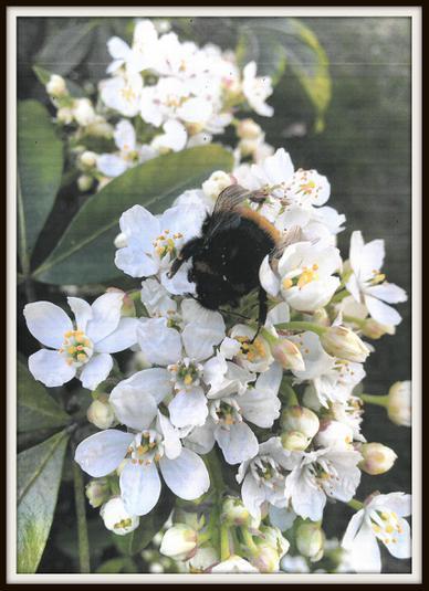 Xavi, Fox: Bees buzzing in the shining sun!