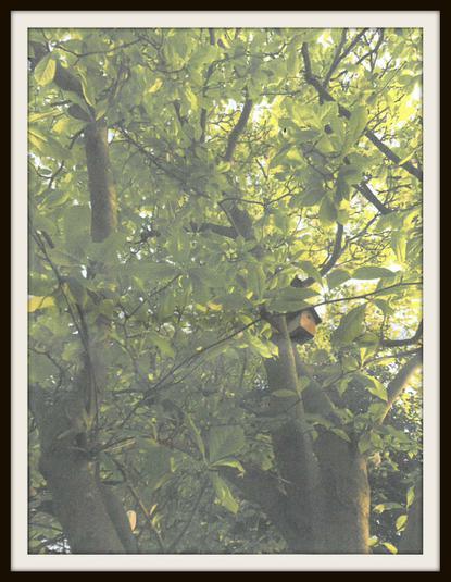 Leo, Mouse: Just my tree I climb