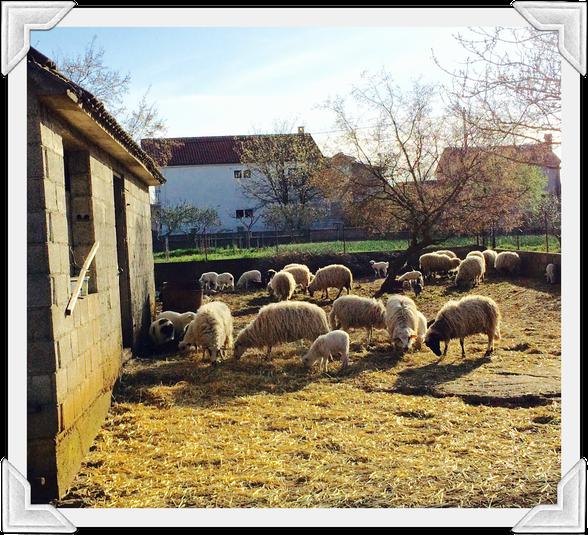 Noah in Mouse Class: Springtime in Croatia