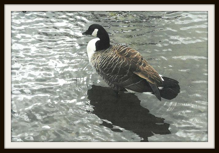 Kayla, Otter: A goose in Bromley!