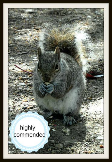 Gregory, Squirrel: Squirrel in Kelsey Park