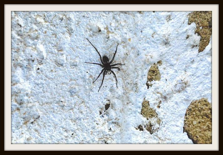 Charlie, Fox: A spider in my garden