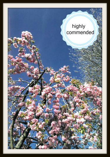 Audrey, Hedgehog: Blossom floats like confetti