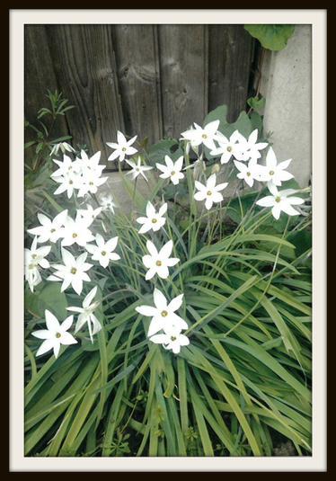 Mia, Rabbit: Flowers from my garden