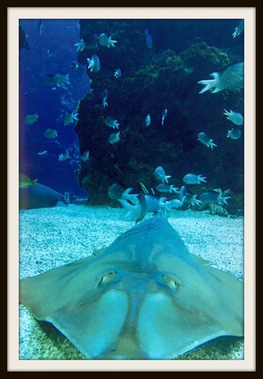 Yilin, Badgers: Marine life in Monaco Aquarium