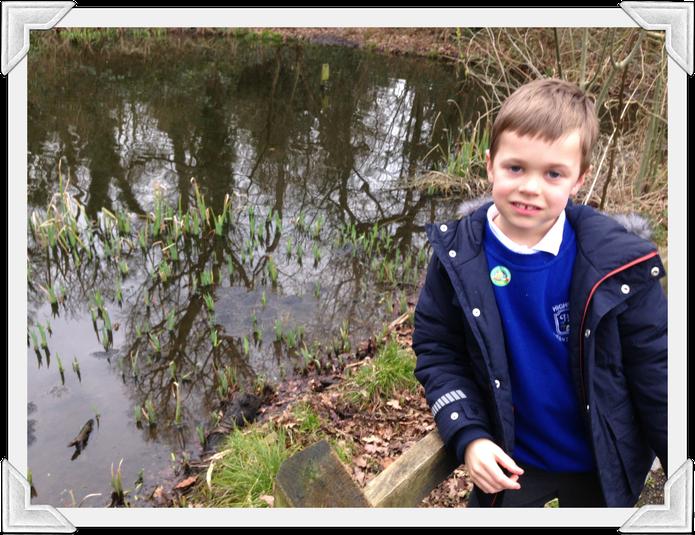 Albie, Fox Class, saw frogspawn in Kingswood Glen