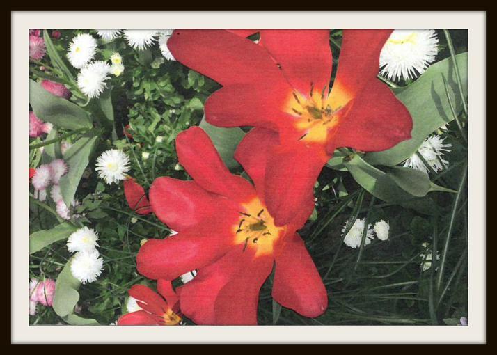 Sam, Badger: Flowers