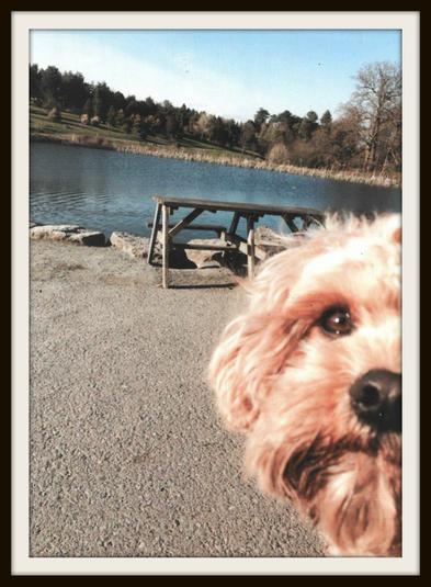Archie, Rabbit: I love my dog!